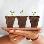 Planten die lucht zuiveren