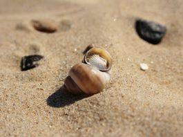 Strand gezond