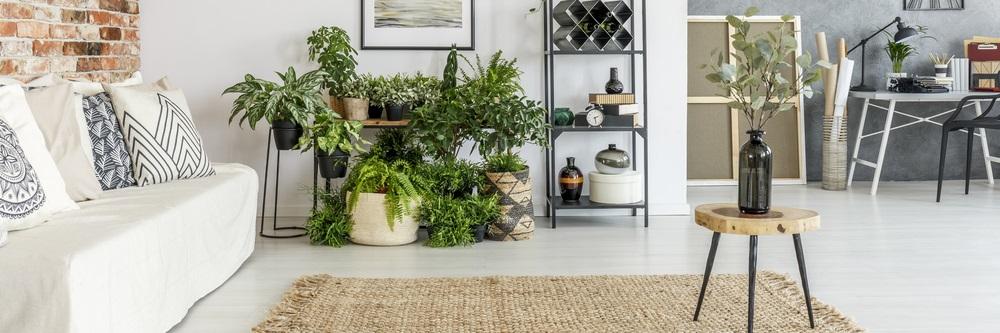 Meer planten in huis